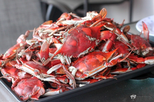 Classic Steamed Blue Crabs